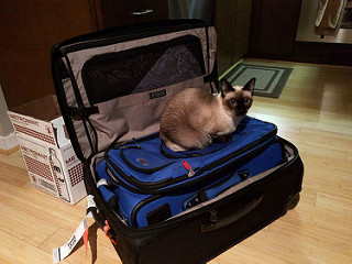 Simcoe on Suitcase