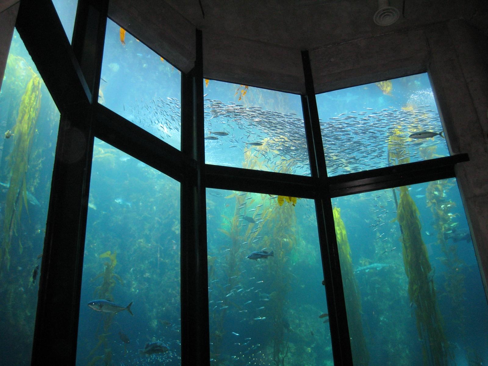 Kelp Forest At The Monterey Bay Aquarium Places To Go