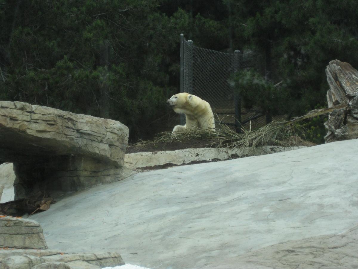 San Diego Zoo! – pleia2's blog